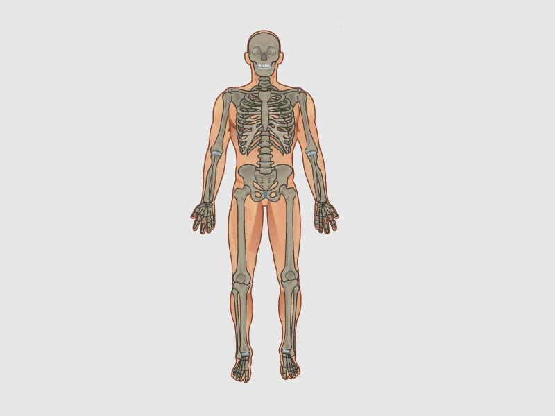 Der Körper des Menschen - MINTdigital